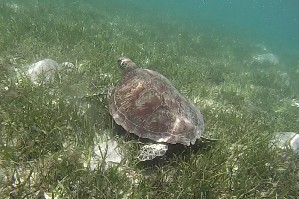 Australia green island