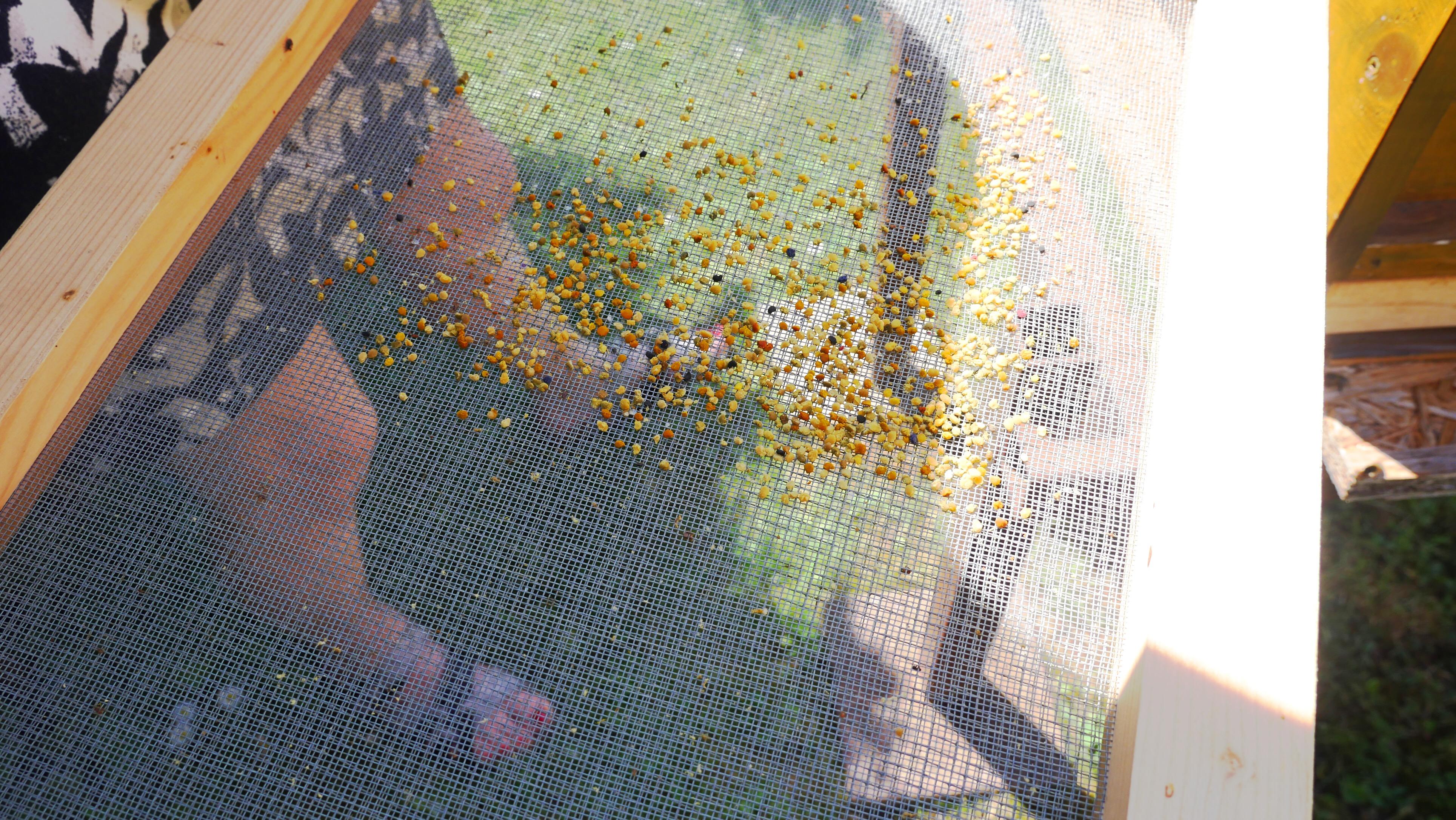 pollen beekeeping