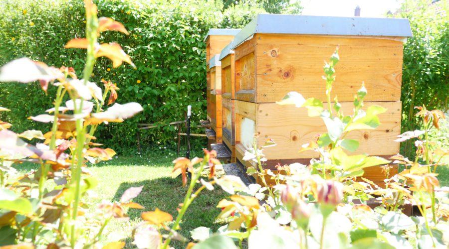beekeeping germany